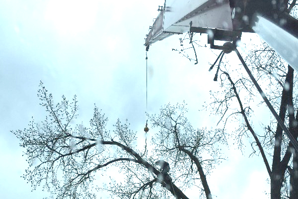 Allstate Crane Tree Removal